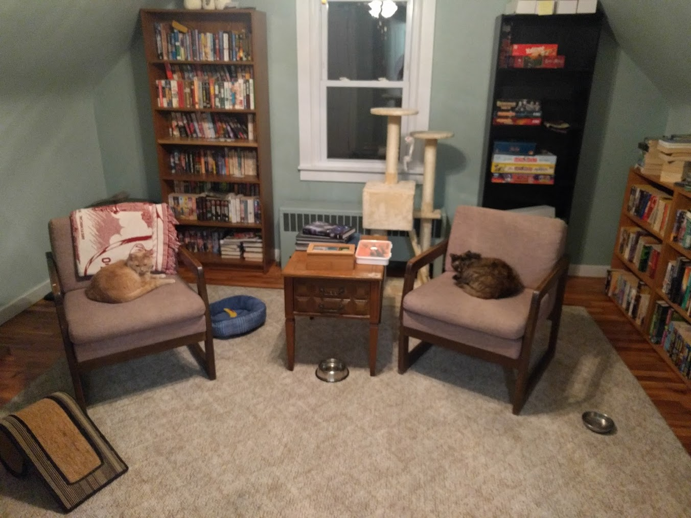 A ginger cat and a tortoiseshell cat curled up on comfortable looking library chairs. They are in the center of a room with a hardwood floor and a large number of bookshelves lining the walls.